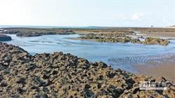 桃園藻7千年藻礁為何重要? 台大教授:它具世界遺產潛力