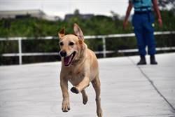 搜救犬網路票選  台東「健康」衝第一