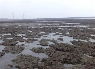 搶救大潭藻礁行動聯盟:由行政院系統處理是「變成請鬼拆藥單」