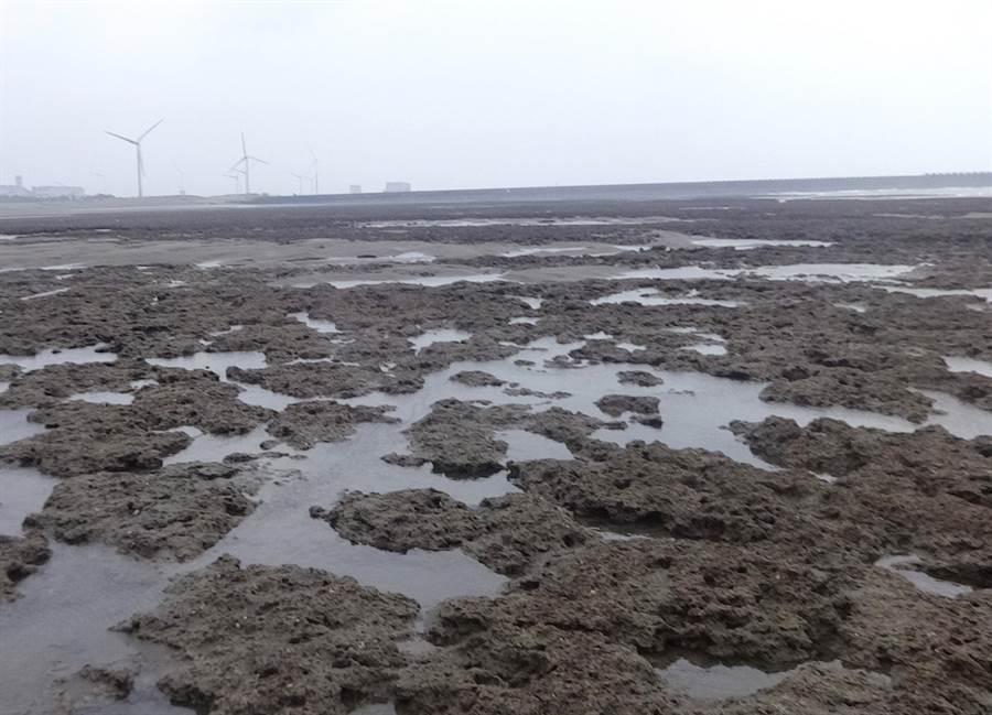 搶救大潭藻礁行動聯盟10日發表聲明,觀塘三接交由行政院系統處理是「變成請鬼拆藥單」。(賴佑維攝,資料照)