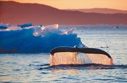 極地淨土 格陵蘭冰融翻身