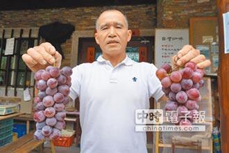 新故鄉願景》感念父母 彭文欽種出鮭魚葡萄