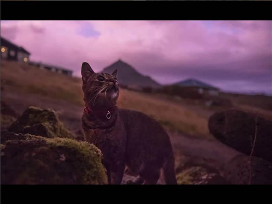 「出喵頭地!」 冰島酒店竟聘請貓咪擔任部門主管(圖/取自instagram/pal.the.mousekeeper)