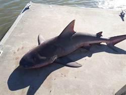 休閒河釣竟遭危險夾攻 前鱷魚後鯊魚該選哪一邊?