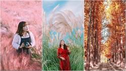 相機請準備!韓國秋季打卡點「紫色芒草、黃色銀杏、紅色楓葉」攻佔你的IG