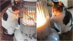 抱緊處理!日本超怕冷「取暖貓」 貓:誰也別想拆散我們