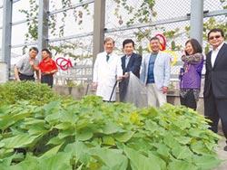 中國附醫成立城食森林學院