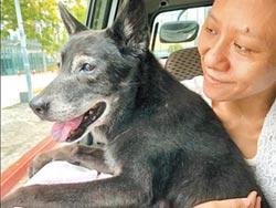 百歲石黑黑 新北最長壽犬瑞