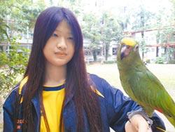 鳥店女兒寵鸚鵡 不准賣