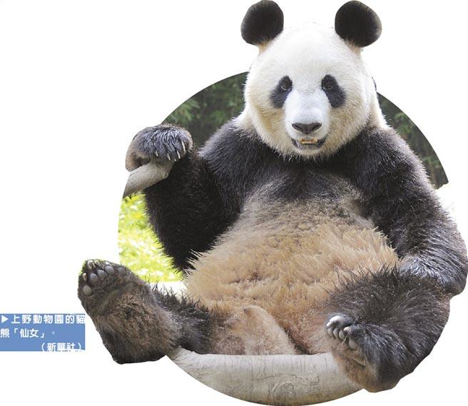 上野動物園的貓熊「仙女」。(新華社)