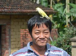 蕉農田間拾獲牡丹鸚鵡 親暱像小跟班