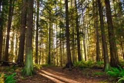 加拿大樹林地面劇烈起伏 就像「地球在呼吸」!