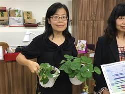 苗改場研發分子檢測技術 救5千萬元草莓苗