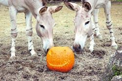 歡度萬聖節 木柵動物園10月27日開趴