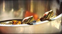 乖巧烏龜也有情緒 眼半開鼻孔會瞪人