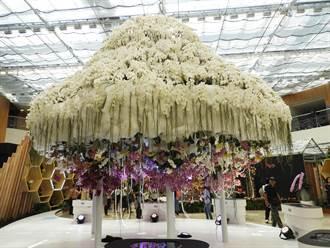 后里花舞館以蘭花為主題創造最美殿堂