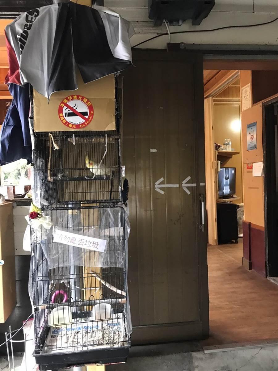 妞妞住在5個籠子打造的透天豪宅鳥籠,空間寬敞。(張祈攝)