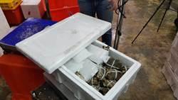 北台灣最大漁市場中鏢 戴奧辛大閘蟹「賣到剩3箱」