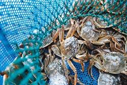 戴奧辛超標 有毒大閘蟹 流入星級飯店