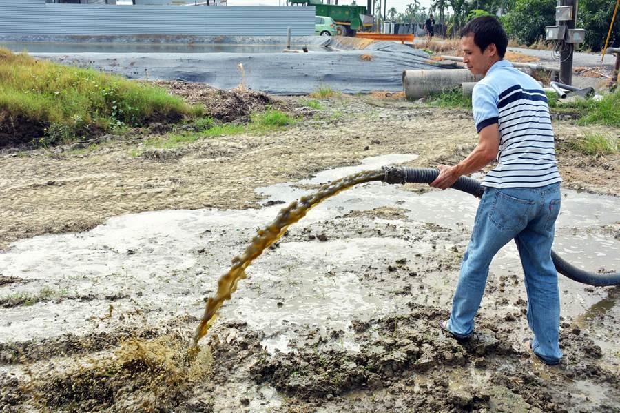 畜牧業者郭建偉響應肥分入田,透過種植牧草用來餵養牛隻,打造低汙染的循環經濟。(林和生攝)