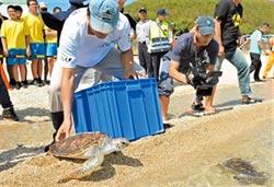 望安野放6綠蠵龜 重返大海