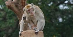 有影》猴囡仔逛新加坡樟怡機場   旅客不敢置信