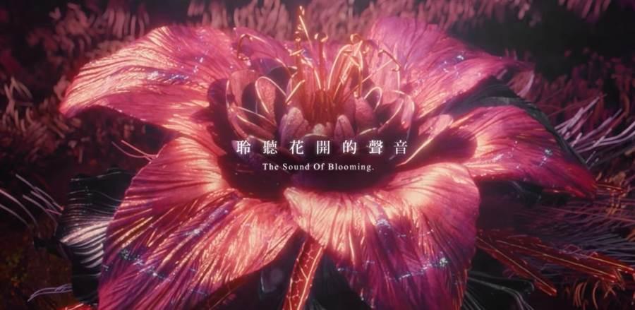 台中市政府公布花博開幕形象影片《聽‧花開》,引發各界好評。(圖/台中市府提供)