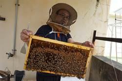 屋頂養蜂 賴弘偉當蜂為寵物