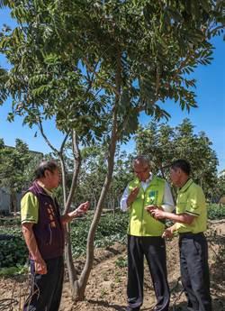 新竹市》無黨籍市長候選人謝文進承諾解決樹下和浸水農地汙染問題