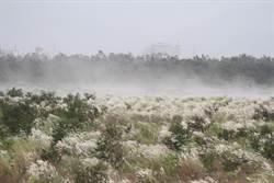 台東》風飛沙議題 成未來縣長棘手問題