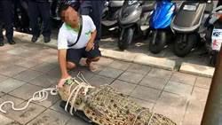 帶鱷魚赴行政院陳情  養殖業者遭裁罰3000元