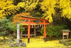 抓住秋季尾巴!「京都」3大銀杏秘境 親身體驗金黃落葉之美