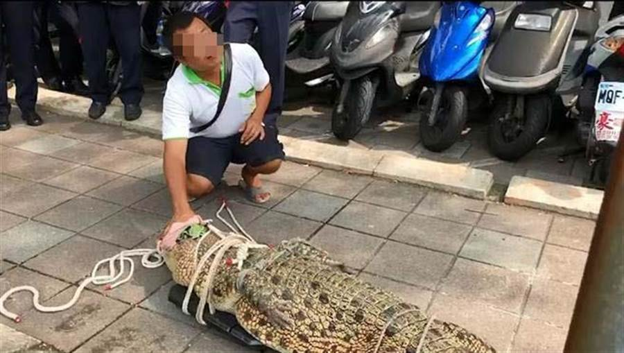 帶鱷魚赴行政院陳情 養殖業者遭裁罰3000元。(照片截取自影片)