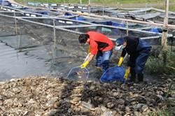 戴奧辛超標大陸大閘蟹 打撈追查短缺的1400公斤