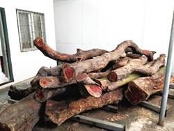 4小時競價近700次 兩株花梨木拍出6400萬天價