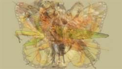 超準心理測驗!從ㄧ張圖看出「你的個性」 原來狼是這麼溫暖的動物