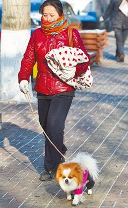 限時遛狗 雲南祭最嚴養犬新規