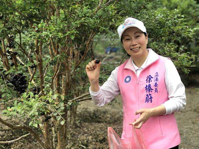 蓮縣長候選人徐榛蔚提出青創 、觀光、農業「三位一體」創新政策。(徐榛蔚服務處提供)