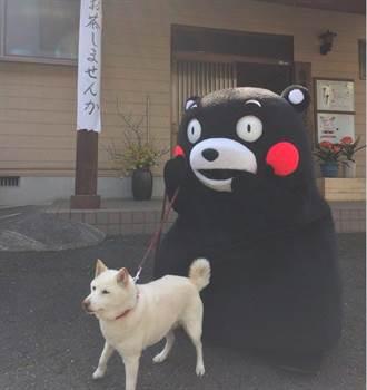 「熊本熊」不是熊?他真實身分曝光 讓台灣網友傻眼