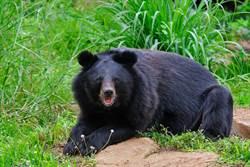 熊女士長年與熊為伴竟遭咬死? 超催淚真相讓人鼻酸