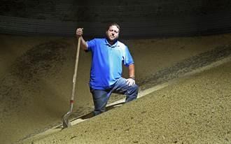 美國農民:堆成山的大豆快爛了 貿易戰何時結束?