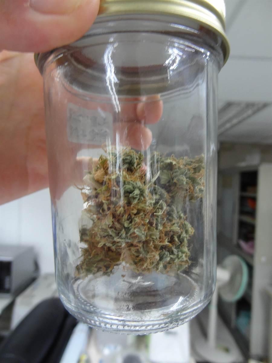 台北市刑大偵5隊查獲男子汲毓翰涉嫌栽種大麻,查獲乾躁大麻。〔謝明俊攝〕