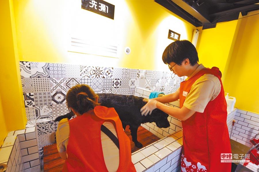 青島寵物酒店,服務人員幫一隻寵物狗洗澡。(CFP)