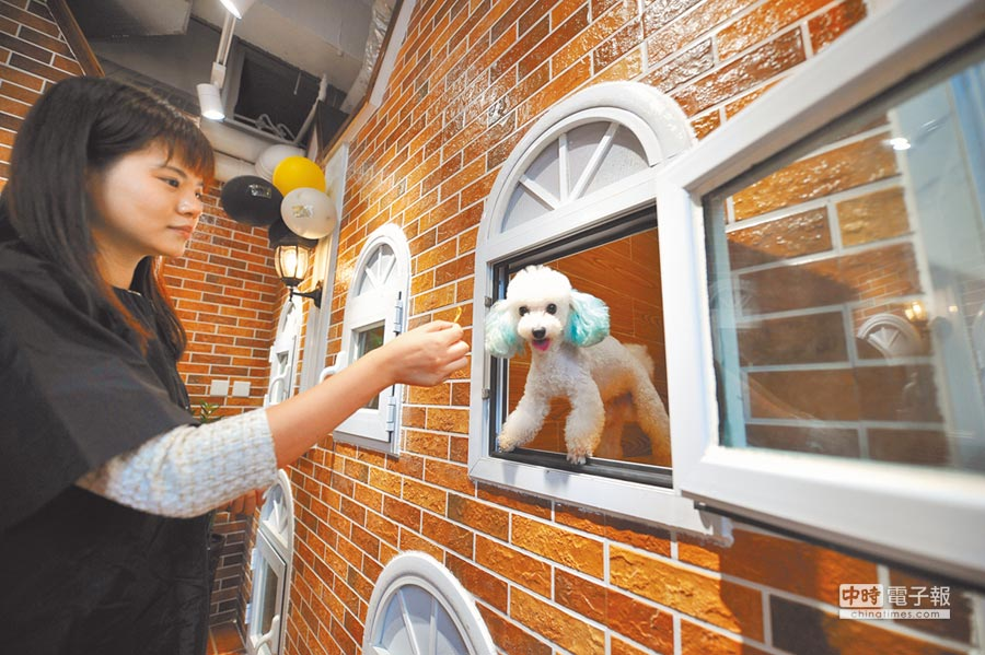 太原一家寵物酒店內,狗狗們享受著高級服務。(CFP)