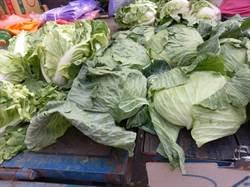 大蘿蔔1條10元!冬季蔬菜提前上市菜價溜滑梯