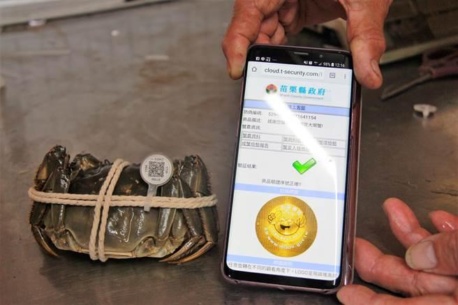 農業處長陳錦俊提醒消費者,選購時務必認明「產地QR code標章」及「雷射防偽蟹環」,確保大閘蟹的品質與來源。(何冠嫻攝)