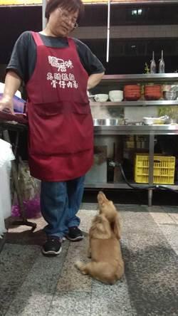汪汪!古早味烏醋麵的臘腸犬 愛跟客人打招呼