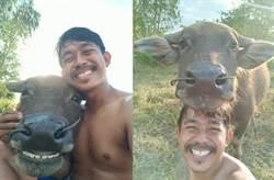 水牛與主人曬幸福自拍照 甜出蜜!網友一秒融化