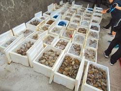 死蟹掉包 16噸大閘毒蟹失蹤