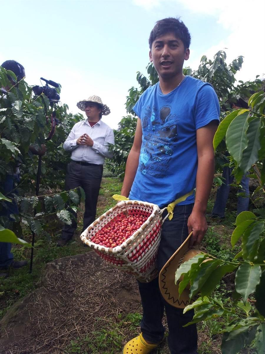 亞洲咖啡年會舉辦生豆評鑑中,台灣阿里山鄒築園咖啡,以其特殊的風味打敗大陸雲南以及東南亞國家獲得冠軍。(馮惠宜翻攝)